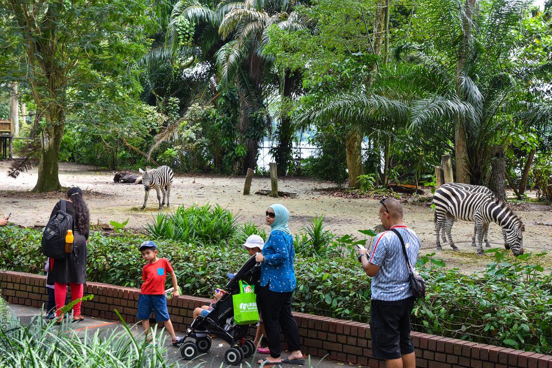 Singapore-zoo-(26)