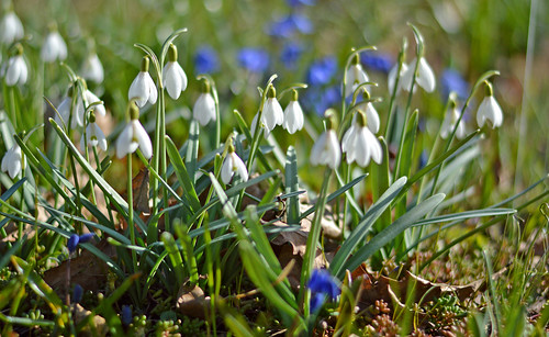 Beautiful spring 💙🌷