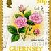 great stamp Guernsey 20p Spray Rose (Rosen, roses, rósanna, 玫瑰, τριαντάφυλλα, róże, розы, バラ, rosas, rožės, roser, ro, руже, güller, ดอกกุหลาบ, rhosod) Bailliage de Guernesey timbre Bailiwick of Guernsey stamps Bailía de Guernsey selo sello  stamps GB by stampolina, thx for sending stamps! :)