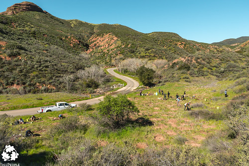 San Francisquito Canyon Planting, March 16, 2019-18