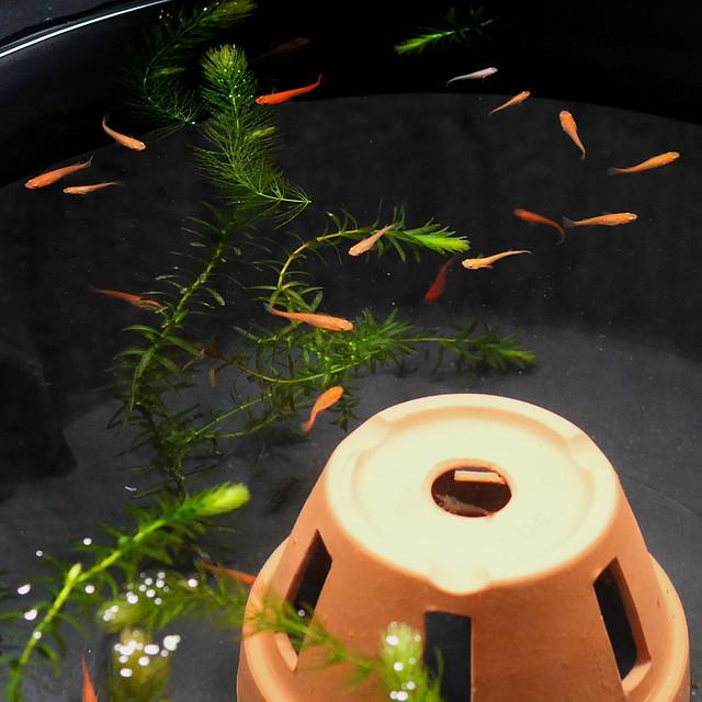 1080x1080 Mini Pond 0325