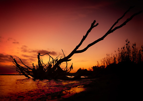 Beach sunset with dead tree tree in Bayou La Batre Alabama