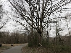 Wolf River greenway