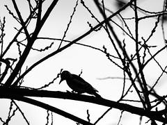 Woodpeckers' profile - Photo of Croix-en-Ternois
