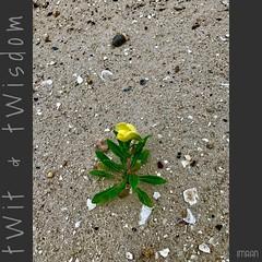 Spring Forth, From Rock Bottom & Rock Bosom  - IMRAN™