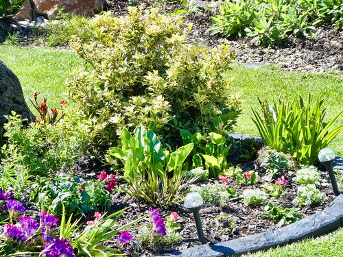 2019-03-30 - Landscape Photography - Garden - Flower Bed