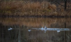 New Year's Day Bird Count 2019