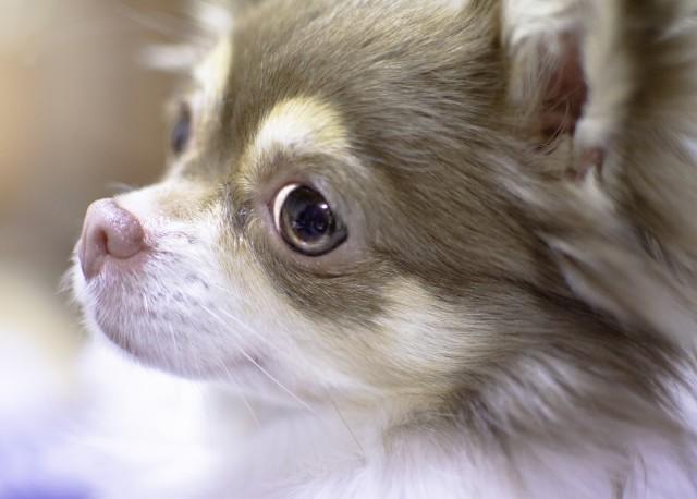 目ヤニがきれいにとれた犬
