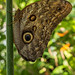 Insel Mainau/Bodensee 2018 - Schmetterlingshaus