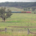 Blue Suede Express Near Molong