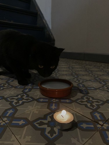 Feestelijke kat