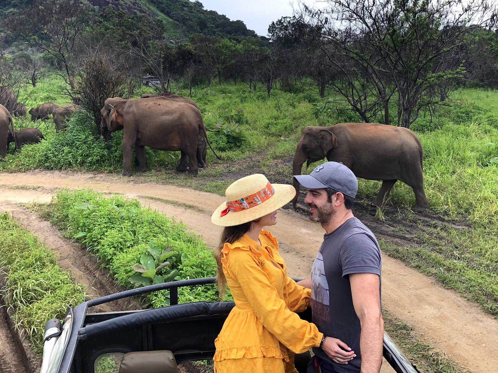 VER ELEFANTES SALVAJES EN SRI LANKA ver elefantes salvajes en sri lanka - 40009426173 1e2a835821 h - Ver elefantes salvajes en Sri Lanka