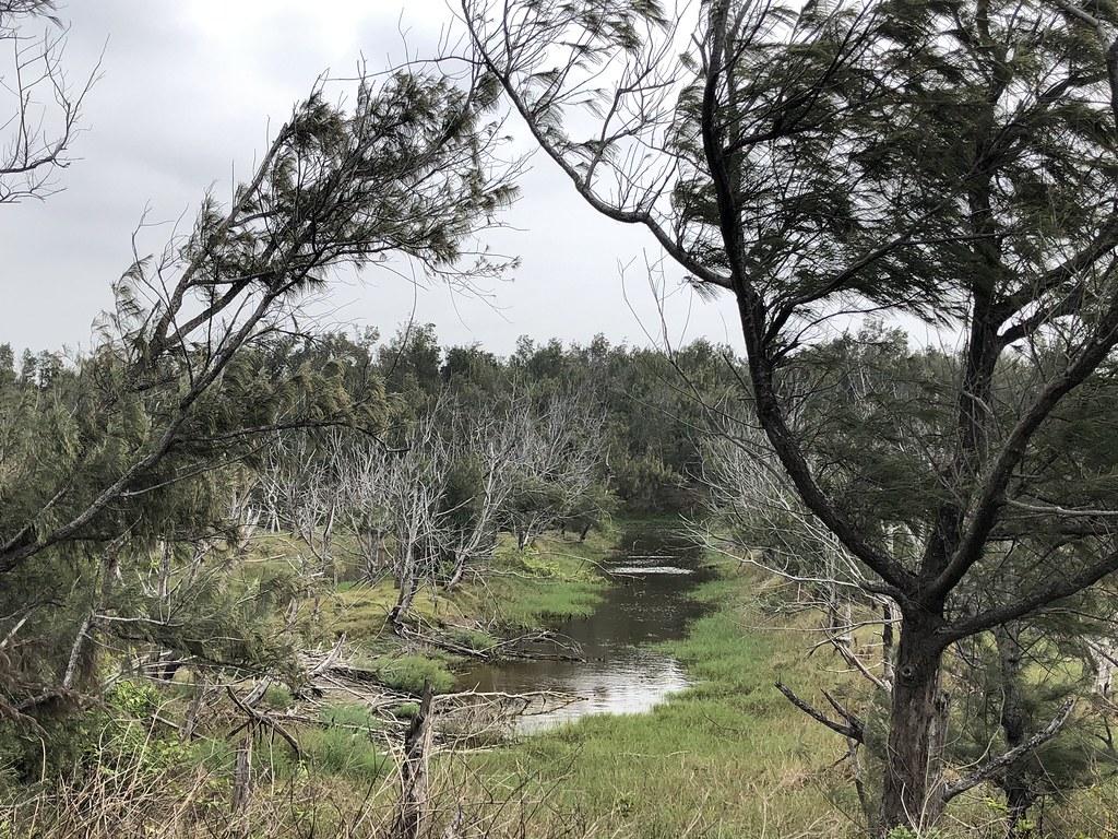 部分區域久淹成濕地,開溝築堤適度引導排水。攝影:廖靜蕙