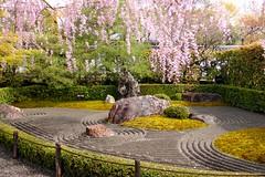 Taizo-in, In-no-niwa (Garden) -1 (April 2019)