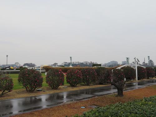 中山競馬場の大竹柵障害観戦スポット