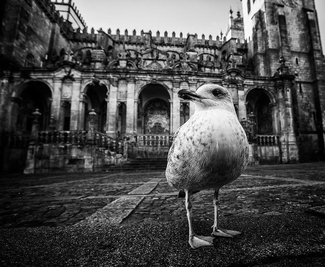 Guard. Porto, Sé Catedral.