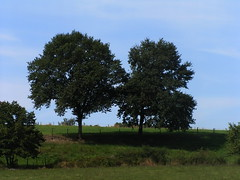 20080910 34646 1011 Jakobus Bäume
