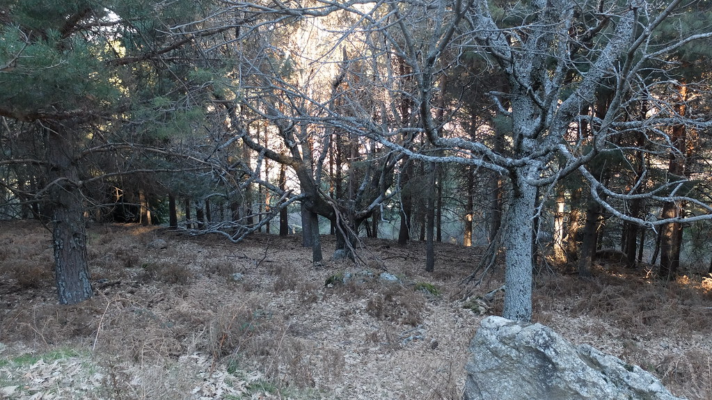 Y los buitres se esconden tras las hojas