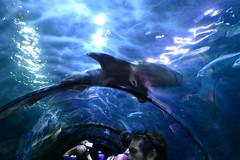 Underwater Tunnel [3]