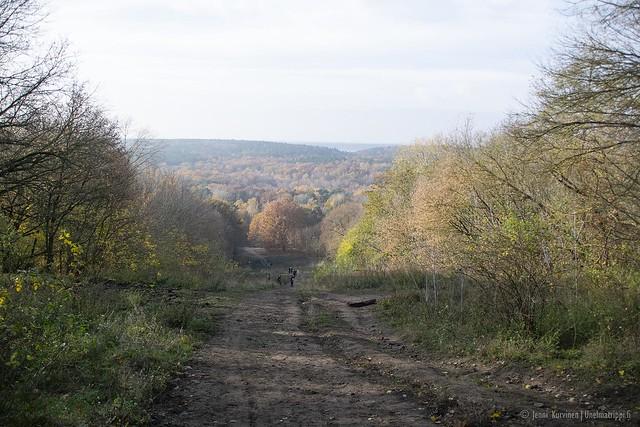 Näkymä Grunewaldin metsässä mäen päältä Teufelsbergistä