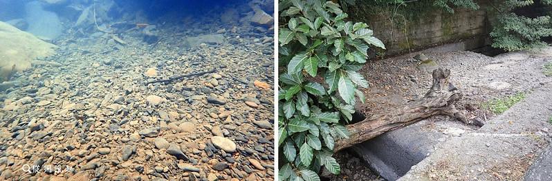 水量少的小溪若沒有連續壩體,常變這樣單調死寂:西爽表面被土砂填平,稍不下雨一段時間就成乾溝。