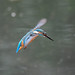 Kingfisher 190317073-2.jpg