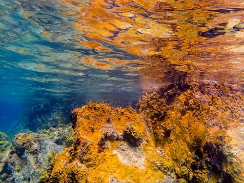 DCL Fantasy March 2019 Wednesday Underwater-39.jpg