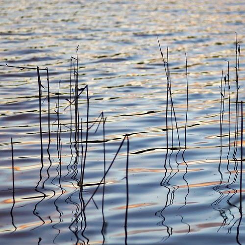 Ripples and reeds