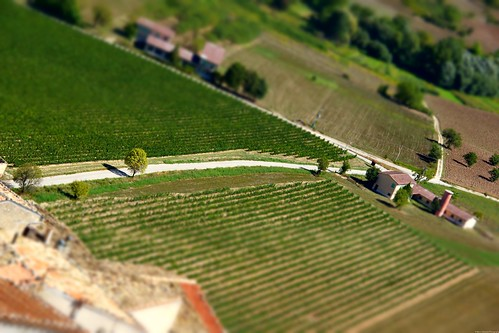 Road through the grapevines
