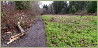 Haro Road Trail