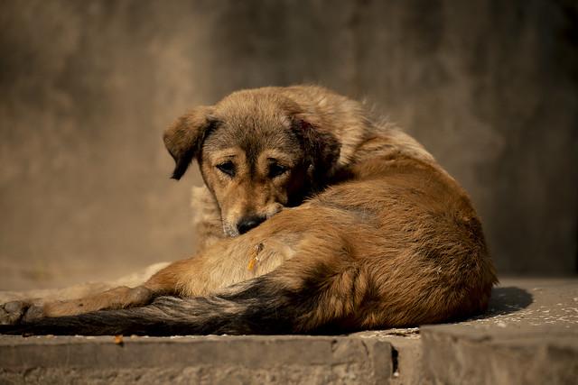 Its a dogs life....Street Shots From Thamel Kathmandu Nepal 11/2018
