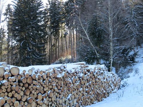 Winterwald mit Holz