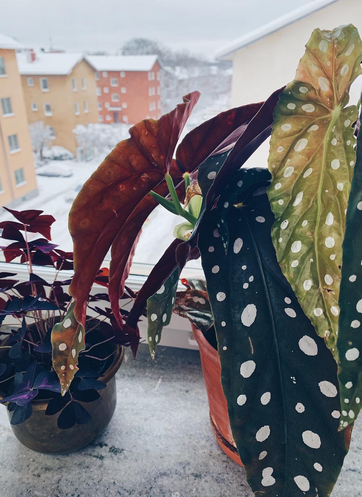 prickig växt