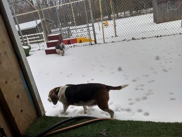 02_12_19 Snowball Play :-)