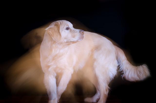 Spectral Hound 9/52