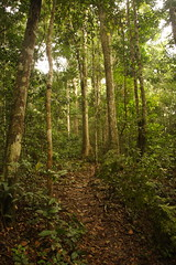 Rainforest in Ivindo National Park in Gabon