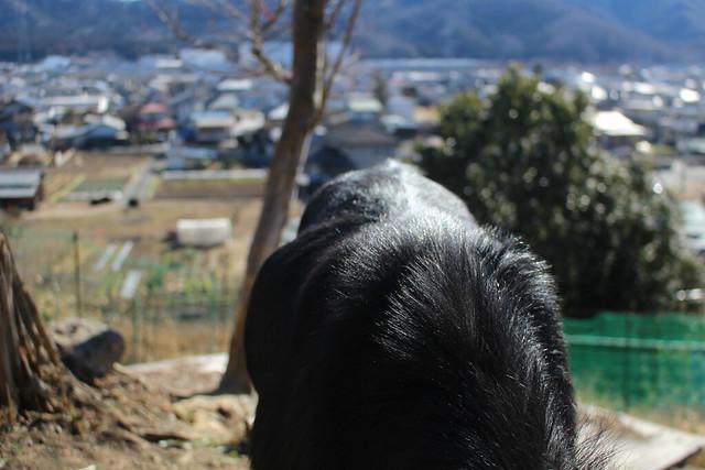 kamowake-yagi005