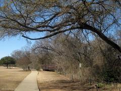 early Spring dogwalk