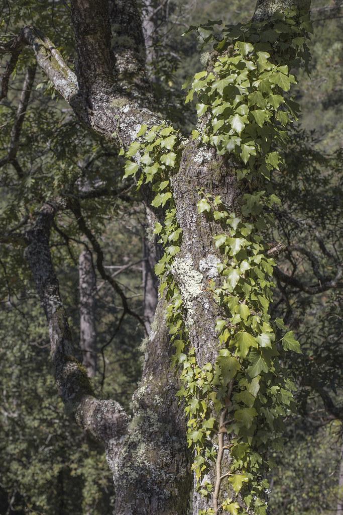 Geres_floresta_5