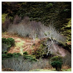White Wood.  Red Point, near Gairloch.