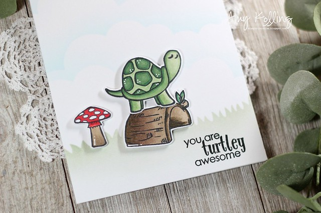 Pet Turtle2