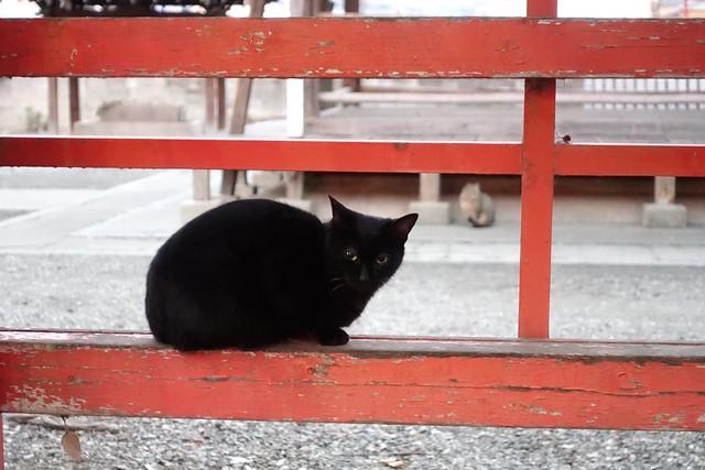 Today's Cat@2019-02-17