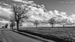 Composition with trees, clouds and tarmac - Photo of Beaupuy