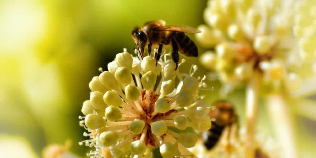pollinisateurs-déclin-généralisé