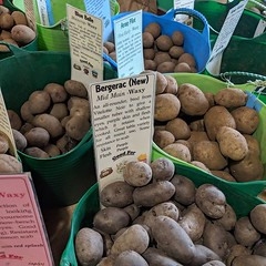 Today I saw over 70 varieties of potato in one place and learned that there's one called Bergerac. It's been an enlightening weekend.