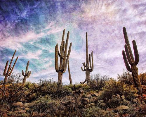 Mighty Saguaros