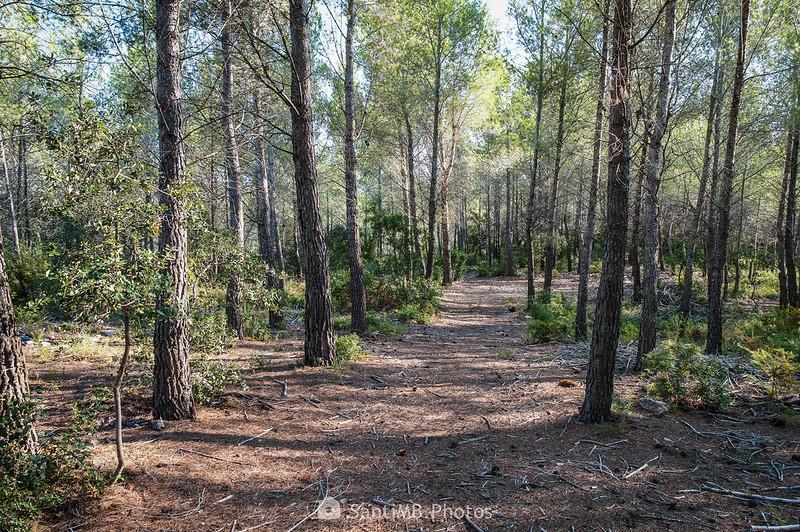 Camino de Sant Llorenç de la Senabre