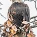 Steider Studios.Birds.12.22.18-3