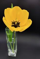 Belle de printemps