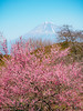 Photo:岩本山公園(静岡県富士市) By kzy619